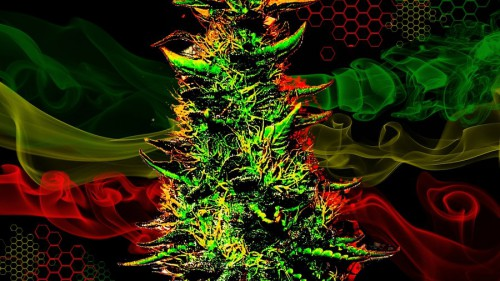 cannabis wallpaper. cannabis wallpaper. Úvod